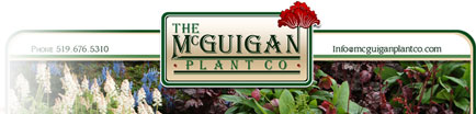The McGuigan Plant Co